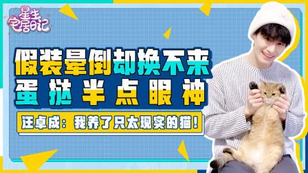 《陈情令》汪卓成每天都锻炼学习,还陪家人和猫?傲娇舅舅竟然是最乖宅男
