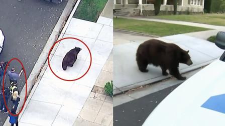 """真大胆!实拍:一只熊街头漫步上演""""熊出没"""" 群众纷纷围观拍照"""