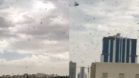 实拍:沙漠蝗虫成群结队过境沙特袭击巴林 遮天蔽日阻断交通