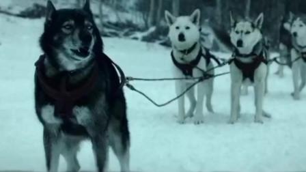 美国大片:一个人,一条狗,冰天雪地经历生死挑战!