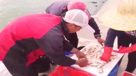 赶海抓到后多这种小鱼,可以卖不少的钱了