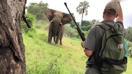 大胆向导被大象踢腿毫不畏惧 出声将其赶走