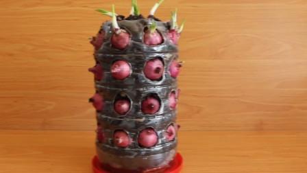 阳台种菜,巧用塑料瓶种葱,种一瓶子一家人就吃不完了,简单实用