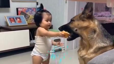 无意间拍到这一幕,暖化了,这就是孩子跟狗狗之间的友谊!