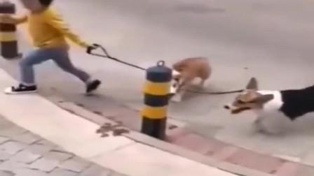 小宝宝佛系遛狗,丢不丢随缘,狗狗:我太难了!