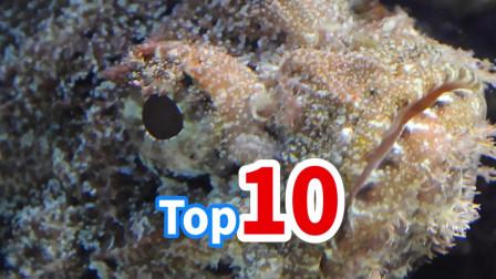 Top10世界上最毒的海洋生物——NO·7