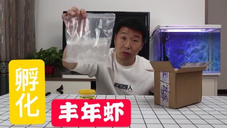 丰年虾卵开箱:花费30个小时孵化的丰年虾,能吃吗