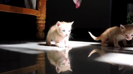 烟道里救出脏兮兮的小奶猫,摇身一变太帅了