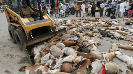 上千只狗狗躺在街上,到底发生了什么?看后莫名心酸
