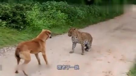 """""""我知道我是狗,但是你连狗都不如"""",四川方言搞笑配音"""