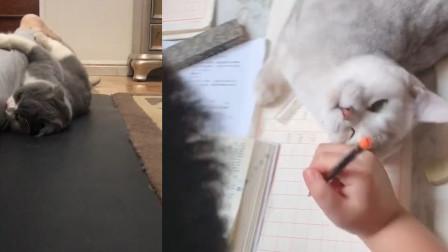 当可爱猫咪让你陪它玩,你会怎么做?网友:没有抵抗力啊!