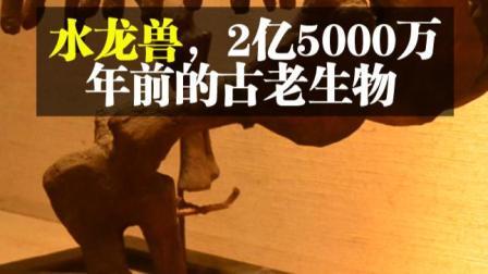 水龙兽,约2亿5000万年前的古老生物
