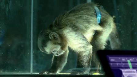 科学家用猴子做实验,往容器内输入仙女座菌株,猴子立马就没气了啊
