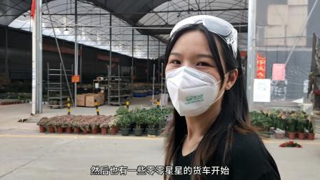 复工开始!小姐姐带你看看暂停后重启的广州两大绿植花卉批发市场