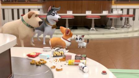 短腿小柯基:小公举有三只舔狗,全都跟着她宠着她呢
