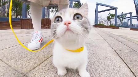 带小奶猫出门玩,跑得比兔子还快,绳子都拉不住!