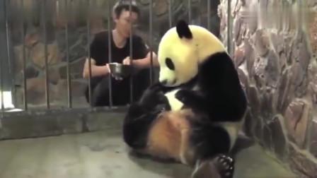 熊猫:不加蜂蜜就不给娃,这位熊猫妈妈,还挺有脾气