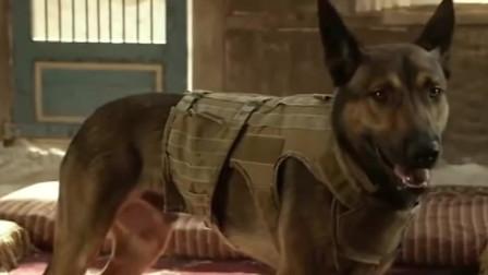 我是传奇2最新预告 威尔史密斯携爱犬再战僵尸 拯救世界