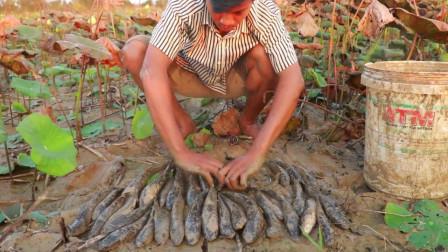 农村小哥去藕田里搞野,黑鱼抓了一条又一条,看看他抓获了多少?
