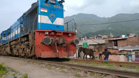 火车高速驶来,小骡子一头撞向火车,主人拉都拉不住!