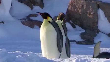 为什么生活在南极的企鹅是黑白配色,而生活在北极的北极熊却不是黑白配色呢?