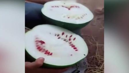 买了个西瓜老板说包红包甜,切开的那一刻,我懵了!这是冬瓜出了轨 还是西瓜劈了腿