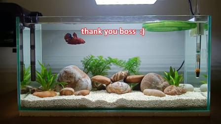 不花钱同样可以做出精美的鱼缸造景,利用好你身边的资源