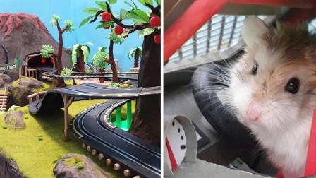 仓鼠的致命游戏,没点智慧根本玩不起来,真是厉害了