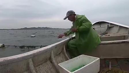 赶海抓到一条大鲈鱼,看看还有没有什么好货