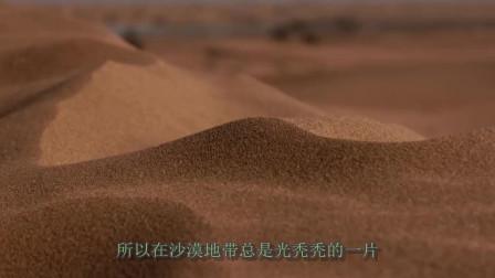 中国内蒙古出现奇迹?将黄河水引入沙漠后,没想到发现了奇观