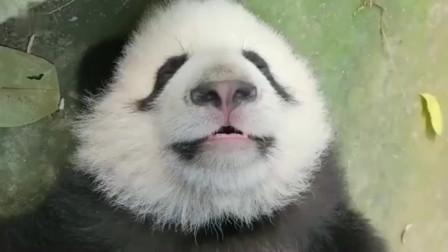 熊猫:我入睡只许一秒,不信我就现在就给大家表演一下