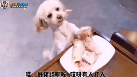 搞笑配音:小狗溜近酒店偷吃骨头被发现倒地不起!这是怎么个情况啊