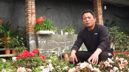 """春季花卉往室外移,选个""""合适时间""""很重要,否则整盆枯萎!"""
