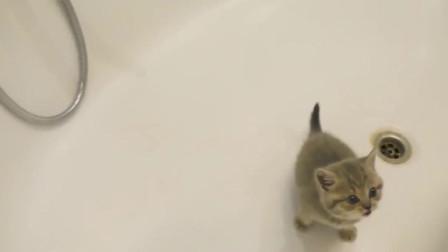 萌宠被放在浴缸里的小奶猫,一脸着急:救命,我不要洗澡