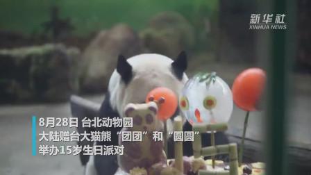 """台北动物园造专属蛋糕为大熊猫""""团团""""""""圆圆""""庆生"""