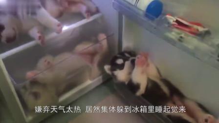 天气太热了,小伙将冰箱门打开后,眼前的场景让人哭笑不得!