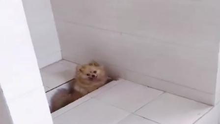 上厕所时发现了一只狗,这货掉下去了,我都不知道该怎么救它!