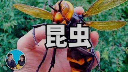 (03 04 1080p)你所不了解的昆虫 - 老高与小茉 Mr & Mrs Gao