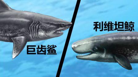 史上最强两大海怪—巨齿鲨和利维坦鲸