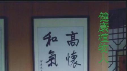 武汉农村田间地头有种野草能治胃癌,你认识吗?它就是唇形科植物癞蛤蟆草