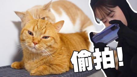 24小时跟拍猫咪迷惑行为!这也太hentai但你喜欢