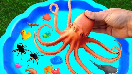 动物世界:超益智!你知道生活在海里的哪一只的动物脚最多吗?