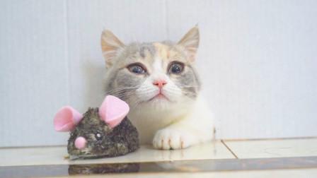 猫咪能不能钻进老鼠洞?猫:放我进去抓老鼠!