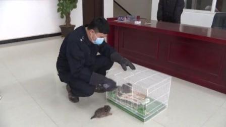"""云南普洱景东:甘蔗地里捡回三只""""小猫咪"""" 原是国家三有保护动物豹猫"""