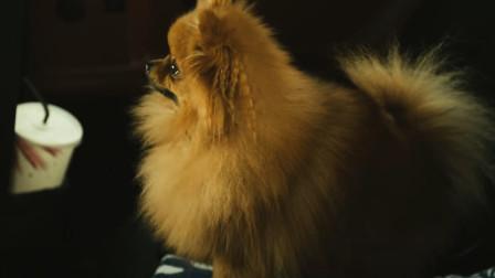 大海啸:小情侣撒惹到狗狗了,狗狗狂叫,这我不吃!