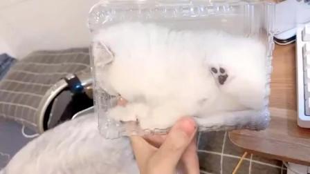 喵喵:新鲜出炉的喵盒子 ,迷你小可爱