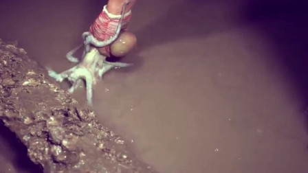 晚上赶海惊喜连连,抓鱼一只超大的章鱼