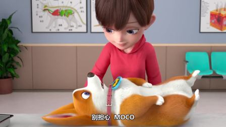 短腿小柯基:喂食的是本大帅狗减肥的最大干扰力,没有之一!