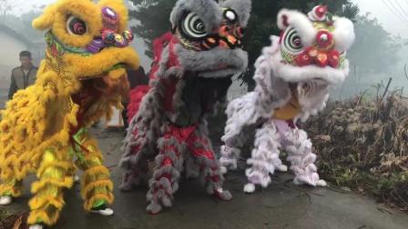 广西北流市民乐镇飘竹垌 2020年正月初一醒狮拜宗祠