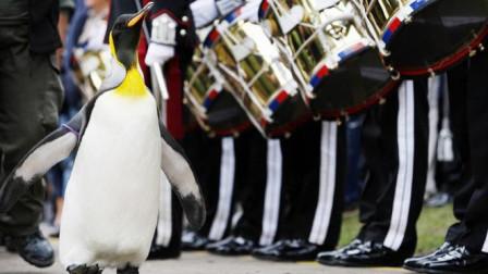 一只企鹅被挪威国王提升为准将,简直是动物界的巅峰!